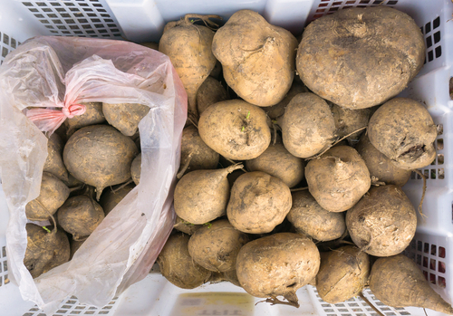 Yams are starchier than sweet potatoes